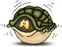 afraid turtle